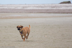 20150726_sandy_neck_155.jpg (R Glen Grusmark) Tags: dogs ocean screensaver water harbor tippy barnstable sandyneck ma hugo massachusetts unitedstates us