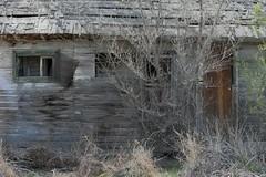 Line shack (Rocky Pix) Tags: lineshack line shack derelict farm house pastoral longmont boulder county colorado rockies stvrain river basinrockypixrockymountainpixw michel kiteleyf16125thsec70mm70200mm f28g vr nikkor telezoom monopod