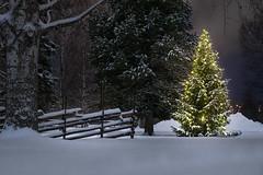 Happy 2018! ~ 52/52 | 2017 (mcqal) Tags: christmas christmaslights christmastree snow winter landscape night sony longexposure a6000 sigma60mmf28dnart skellefteå nordanå trees