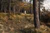 (Ozma87) Tags: appennino tosco emiliano bologna granaglione toscana alberi autunno cima belvedere cappella maesta faggio bosco sentiero hiking trekking mountain porretta beech peak autumn chilly
