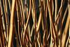 Delay The Inevitable (eskayfoto) Tags: canon eos 700d t5i rebel canon700d canoneos700d rebelt5i canonrebelt5i sk201712277571editlr sk201712277571 lightroom branch growing winter branches plant