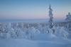 Lapland (NikTäh) Tags: levi finland canon 6d 24105l ef24105l europe mountain alps snow calm blue freezing tree sky scenery landscape sweden norway