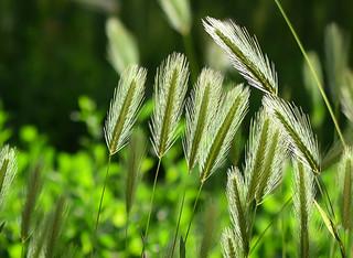 Sunlit Wild Grass