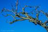 ARBOL Y LUNA (juan carlos luna monfort) Tags: paisaje tronco godall montsia nikond7200 sigma1750 cielodespejado calma paz tranquilidad
