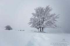 NIRE BIDEAN (Obikani) Tags: urbasa forest snow winter nieve minimal landscape tree mist misty zen cold isolated trees navarra nafarroa beauty beautiful tranquil serene