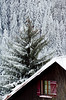 Gérardmer (lesougn) Tags: gérardmer france visitfrance vosges noël tourisme otgerardmer sapin chalets bois ski télésiège pistes lac sentiers merelle basrupts rupts domaine lorraine raquettes saintdiédesvosges épinal thaonlesvosges remiremont perledesvosges perle gérômois altitude mauselaine xonruptlongemer labresse bresse vologne tétras chaumefrancis chaume francis grouvelin prélynx liézey nikon d7000 nikkor 18200 1224