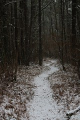 Wharton State Forest (elisecavicchi) Tags: