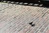 8H2_79100239 (kofatan (SS Tan) Tan Seow Shee) Tags: usa seattle starbucks1912 pikesmarket emeraldcitytour argosycruises redindian safecofield boeing kofatan sstan