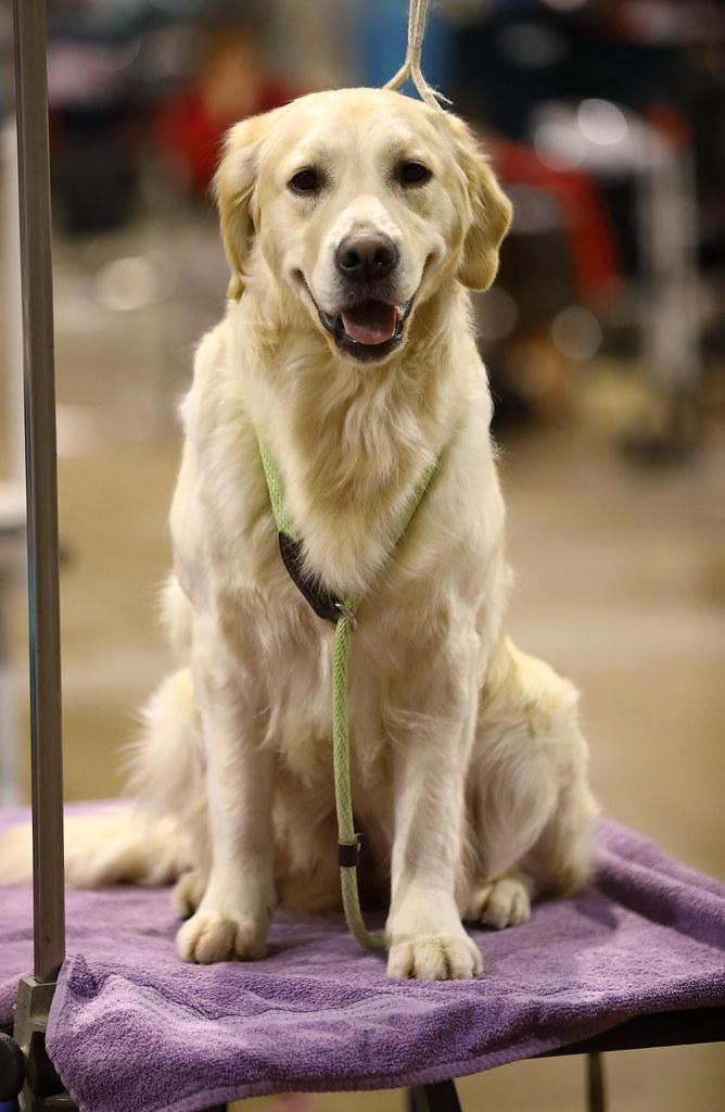 Dog Show Rosemont Convention Center