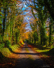 Autumn (cogy) Tags: autumn fall trees leaves leaf colour read yellow green lane