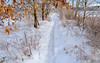 Scarborough Marsh, Maine (jtr27) Tags: dscf5452xle jtr27 fuji fujifilm xt20 xtrans samyang rokinon 16mm f2 f20 wideangle winter scarborough marsh maine newengland manualfocus