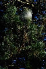 10 - Cotonneux (melina1965) Tags: 2017 décembre december bourgogne burgondy nikon coolpix s3700 saintvallier saôneetloire