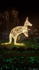 Lo Zoo che Vorrei (The Zoo I'd Want) (Mr. Bamboocha) Tags: 2017 canguro italia italy kangaroo lozoochevorrei lucidartista lucidartista2017 salerno thezooidwant villacomunale it