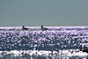 ...on a bright afternoon... (carbumba) Tags: water skijets glittery glitter gulf shine outdoor nikon
