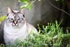 LULU' (fabiogis50) Tags: cat cats pet pets nature