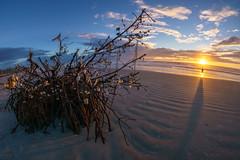 Lost in the Moment - Cherie Down Park - Cape Canaveral, FL (ChuckPalmer {cepalm}) Tags: capecanaveral cheriedownpark fisheye sunrise beach driftwood sky sun chuckpalmer