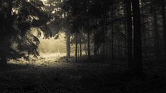 The last one turns off the light (Netsrak) Tags: eu europa europe forst natur nebel wald fog forest mist nature woods