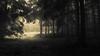 The last one turns off the light (Netsrak) Tags: eu europa europe forst natur nebel wald fog forest mist nature woods