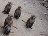 We are five (Zannatun Nayem (Shawon)) Tags: group monkey