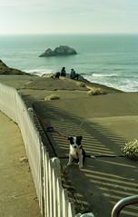 Cliffside puppy, San Francisco (carlfieler) Tags: sanfrancisco puppy dog dogs canonet canonet28 film analog kodak kodakgold kodakgold200 kodak200 seascape waterscape 35mmfilm c41