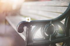 Winters Bench... HBM (KissThePixel) Tags: bench benchmonday monday happybenchmonday hbm nikon nikondf nikkor nikkor12 bokeh bokehlicious dof dofalicious flower creativeart creativephotography woodenbench metalbench macro vintage light sunlight stilllife stilllifephotography 50mm january
