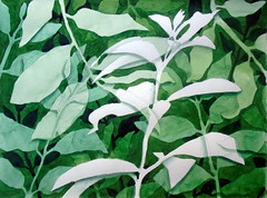 Leaves, negative space - DSC02768 (Dona Minúcia) Tags: art painting watercolor study paper nature leaves negativespace green arte pintura aquarela folha espaçonegativo natureza verde