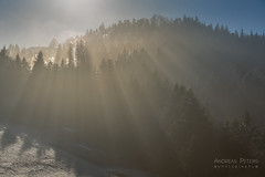 A9908091_s (AndiP66) Tags: ahorn maple sonne sun sonnenstrahlen sunrays gegenlicht backlight morgen morning winter nebel fog january januar 2018 schweiz switzerland sony alpha sonyalpha 99markii 99ii 99m2 a99ii ilca99m2 slta99ii sony2470mmf28zassmii 2470mm sal2470z2 f28 zassmii zeiss variosonnar amount andreaspeters