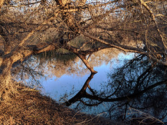 Stillness (Kelson) Tags: hike marsh madronamarsh torrance nature southerncalifornia california southbay trees plants pond reflection