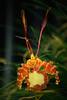 AOS 1.2018-9 (Jordan Cataldo) Tags: aos american orchid society st paul mn winter carnival