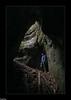 au fond de la Fontaine à Coupot - Sentier karstique des Malrochers - Besain - Jura (francky25) Tags: au fond de la fontaine à coupot sentier karstique des malrochers besain jura franchecomté