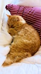 Bliss is . . . (Sandy Austin) Tags: panasoniclumixdmcfz70 sandyaustin westauckland auckland northisland newzealand massey mario cat