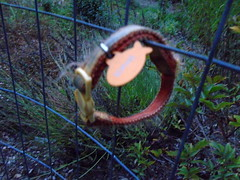 DSC01125 (classroomcamera) Tags: garden decoration circle leash dog abandoned left hanging fence wire intersection intersect nametag tag collar