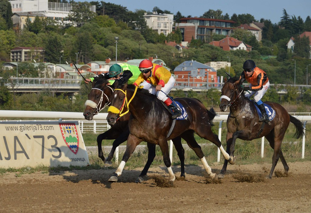 DSC 6653 Eminaknezevic Tags Horses Racing Gallop Hippodrome Horsephotography Horseracing Animal Animalphotography