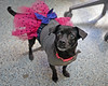 Mia 2  (7) (AbbyB.) Tags: dog canine shelter pet rescue adopt dachshund mtpleasantanimalshelter easthanovernj newjersey shelterpet petphotography