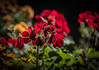 Happy Bokeh Wednesday (Jims_photos) Tags: outdoor outside adobelightroom adobephotoshop shadows slidersunday flowers jimallen jimsphotos jimsphotoswimberleytexas lightroom landscape nopeople nikond750