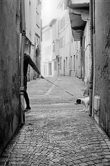 YASHICA PM 108 Yashica ML 2.50 APX 400 New LC29 (Leinik) Tags: yashica pm 108 ml 250 apx 400 new lc29 rue street calle chien noir blanc black white blanco negro