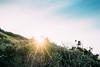 Sunset on a Winter Day (haoguoju) Tags: landscape australia nsw newsouthwales sydney winter outdoor a7m2 a7 sony sonya7markii sonyilce7m2 fe bushwalking hiking mountain fe1635mmf4zaoss 1635mmf4 1635mm f4 coastalwalk zeiss zeiss1635mmf4 longreefpoint longreefpointlookout sea variotessar vario tessar ocean cliff grass longreefpointwalk golfcourse sunset blue green seascape