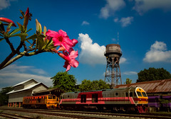 Meandering Oleander (Carl's Captures) Tags: oleander flowers nerium shrub tree plant flora dogbane nature blooms blossoms chiangmaistation chiangmairailwaystation staterailwayofthailand srt chiangmaithailand locomotives locomotiveshops maintenanceshops repairsheds watertower rust rusty tower flower engines horsepower clouds bluesky transportation southeastasia siam thai asian tracks red pink nikond5100 tamron18270 photoshopbyfehlfarben thanksbinexo
