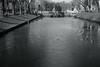 spring light on ice@KÖ, Düsseldorf (Amselchen) Tags: trees ice water city cityscope street bridge mono monochrome blackandwhite bnw light shadow fujifilm fujifilmxseries fujinon xe1 xf35mmf14r fujifilmxe1 season spring
