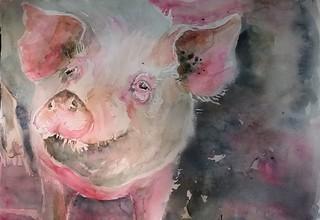 Sketching pigs