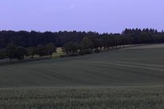 Möhnesee - Haarstrang (Michael.Kemper) Tags: canoneos6d canonef70200f4lusm canon eos 6d ef 70200 f4l f4 l usm deutschland germany nrw nordrheinwestfalen northrhinewestphalia westphalia möhnesee moehnesee möhne moehne see lake sauerland kreis soest gemeinde reservoir mohne mohnesee berlingsen blaue stunde blue hour feld felder field fields baum bäume tree trees haar haarstrang purple violett lila line lines curve curves linie linien kurve kurven