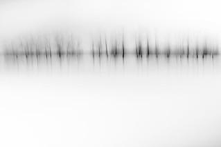 Tree Line - 13/100 X