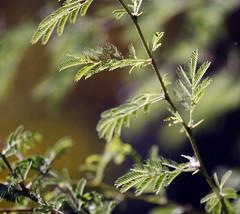 Close up (ryry602) Tags: plants arizona foliage leafy
