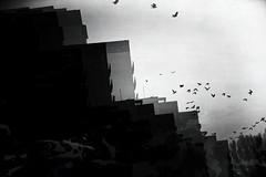 breakout, series (Neko! Neko! Neko!) Tags: blackandwhite blackwhite bw mono monochrome breakout escape dreams emotion feeling past subconsciousness expression expressionism