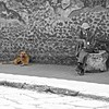 WatchDog (Simone Lenci) Tags: watchdog dog animals germanshepherd germanshepherddog oldmen germanshepherdsofinstagram fluffypets dogwalker dogphotographer wildlifephotographer animalovers fluffylove igclubdogs dogfeatures dogsofinstagram gsdlovers gsdofinstagram instagsd gsdsofigworld dogsofinstaworld excellentdogs thegermanshepherdworld gsdstagram gsdloverstagram bestwoof topdogphoto gsddaily