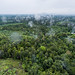 Aerial view of oil palm plantation