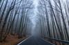 Niebla. (Amparo Hervella) Tags: lasrozasdepuertoreal comunidaddemadrid españa spain niebla puntodefuga paisaje naturaleza invierno d7000 nikon nikond7000