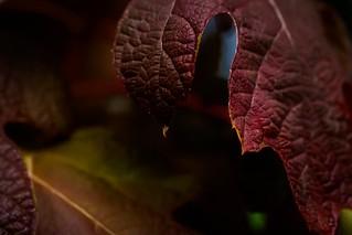 Leaf Adagio
