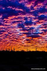Sunrise landscape (doveoggi) Tags: 8908 arizona scottsdale mcdowellsonoranpreserve desert sunrise saguaros silhouette vertical
