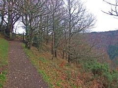 Hunter's Path with gate and copse, Teign Gorge, in early winter (Philip_Goddard) Tags: europe unitedkingdom britain british britishisles greatbritain uk england southwestengland devon dartmoornationalpark drewsteignton teignvalley teigngorge hunterspath views scenery landscapes woodland wood valley hill winter